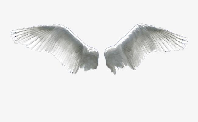hacer alas para volar