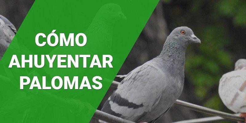 4 Consejos para ahuyentar palomas