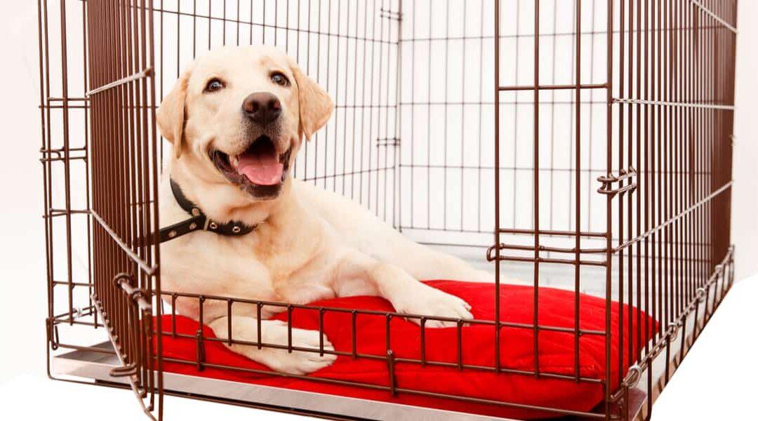 Como hacer jaulas para perros
